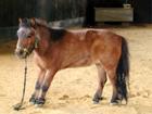 NOV14 VW pony stance